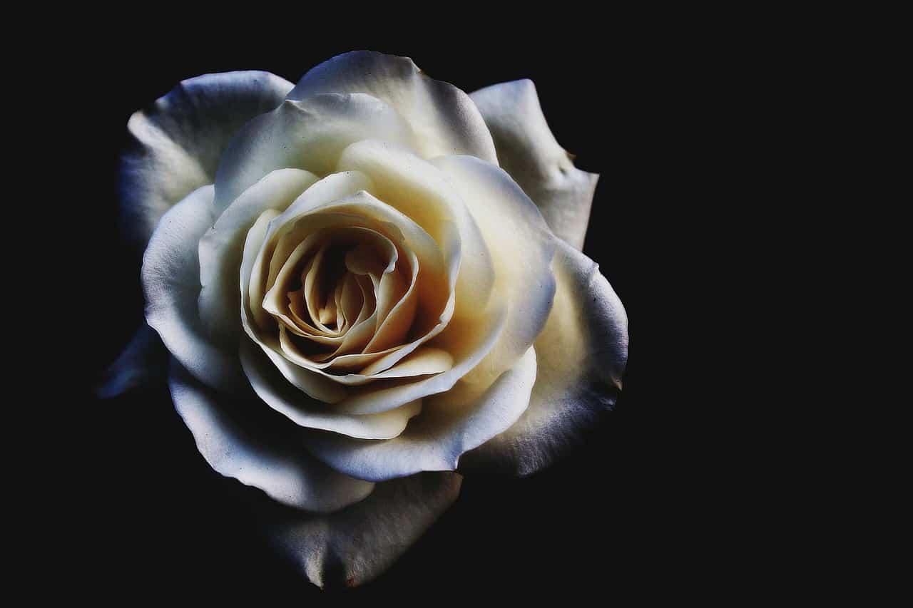 flower-1949242_1280