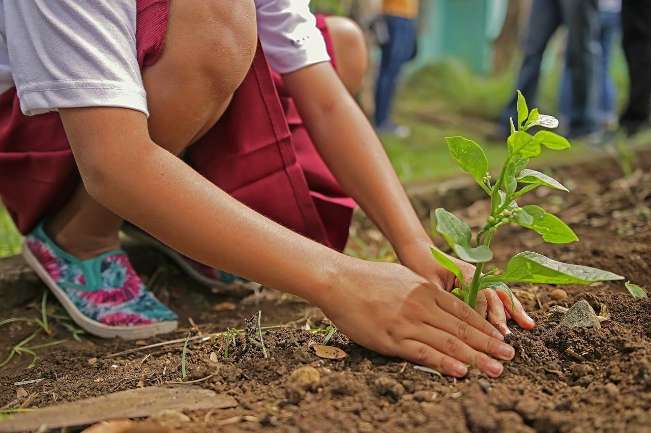 planting 1898946 1280 - 7 วิธีคลายร้อนง่ายๆ ร้อนแค่ไหนเราก็ไม่กลัว!