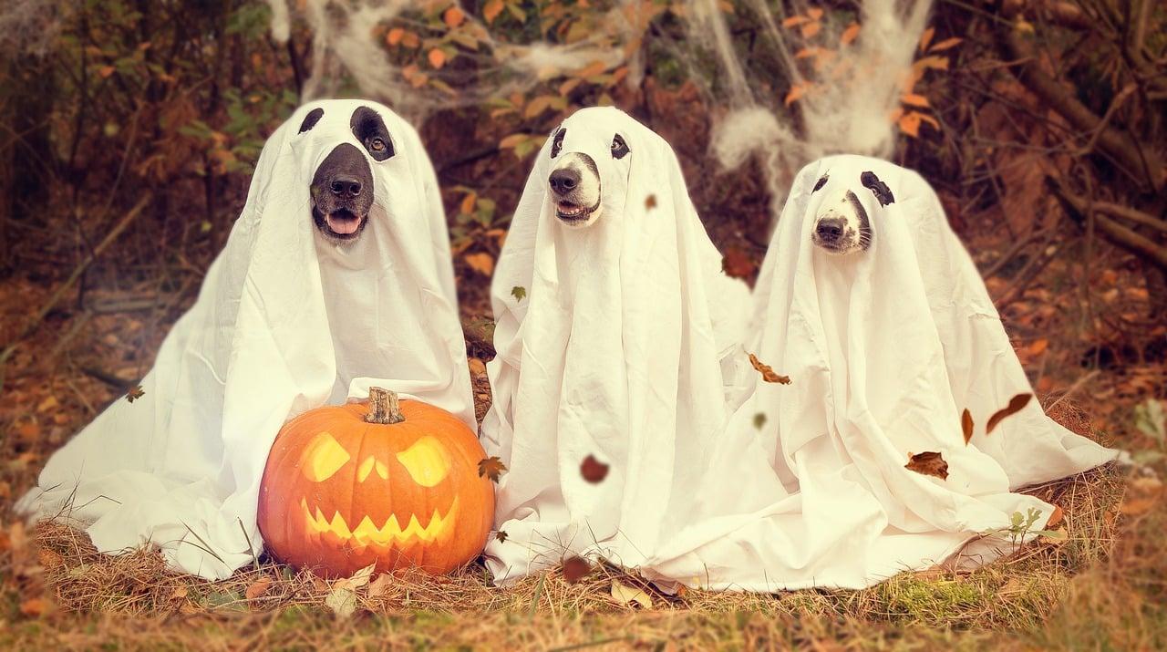 halloween 2870607 1280 - 5 เรื่องน่ารู้วันฮาโลวีน 31 ตุลานี้เตรียมแต่งผีมาหลอกผีกัน!