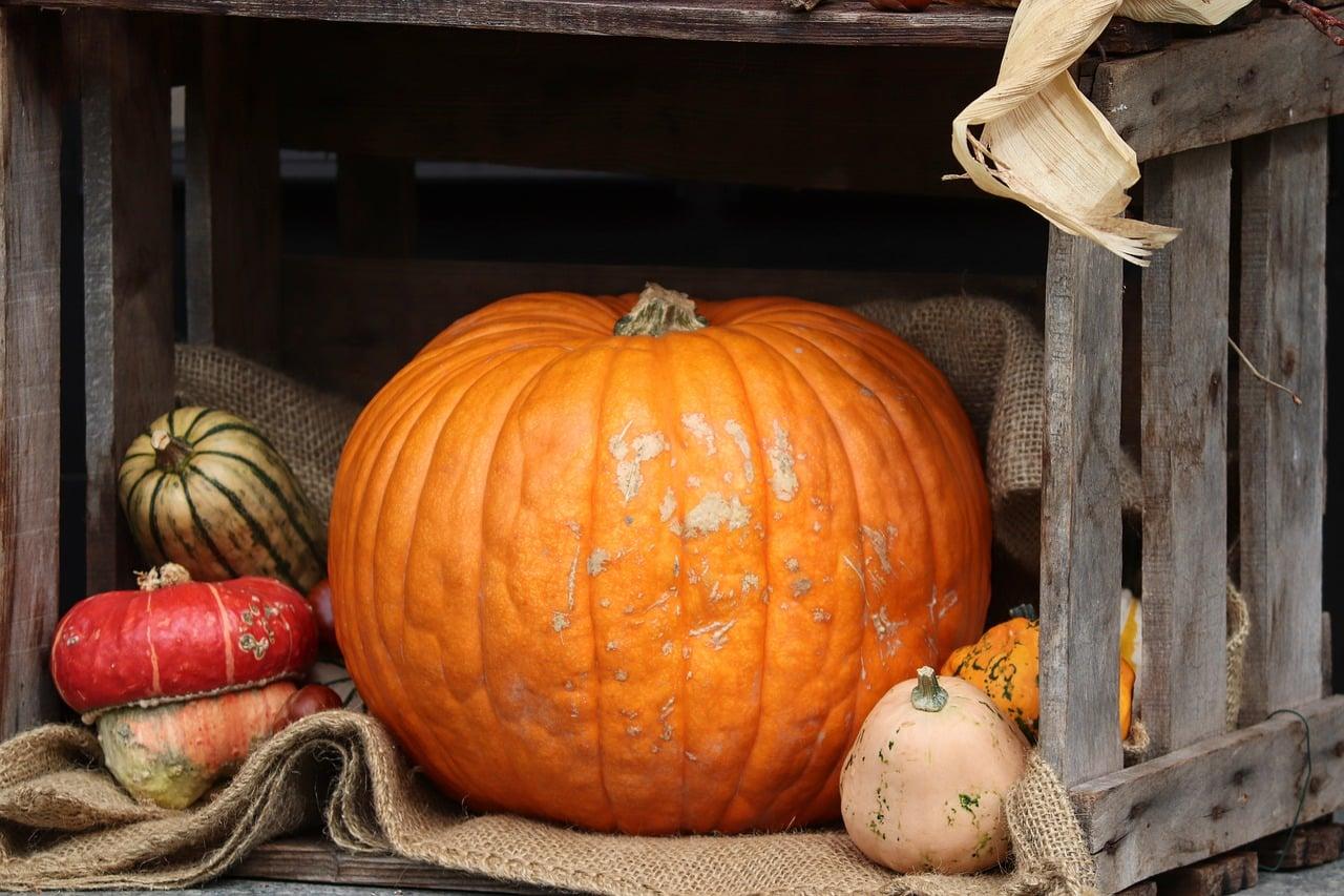 halloween 4501761 1280 - 5 เรื่องน่ารู้วันฮาโลวีน 31 ตุลานี้เตรียมแต่งผีมาหลอกผีกัน!