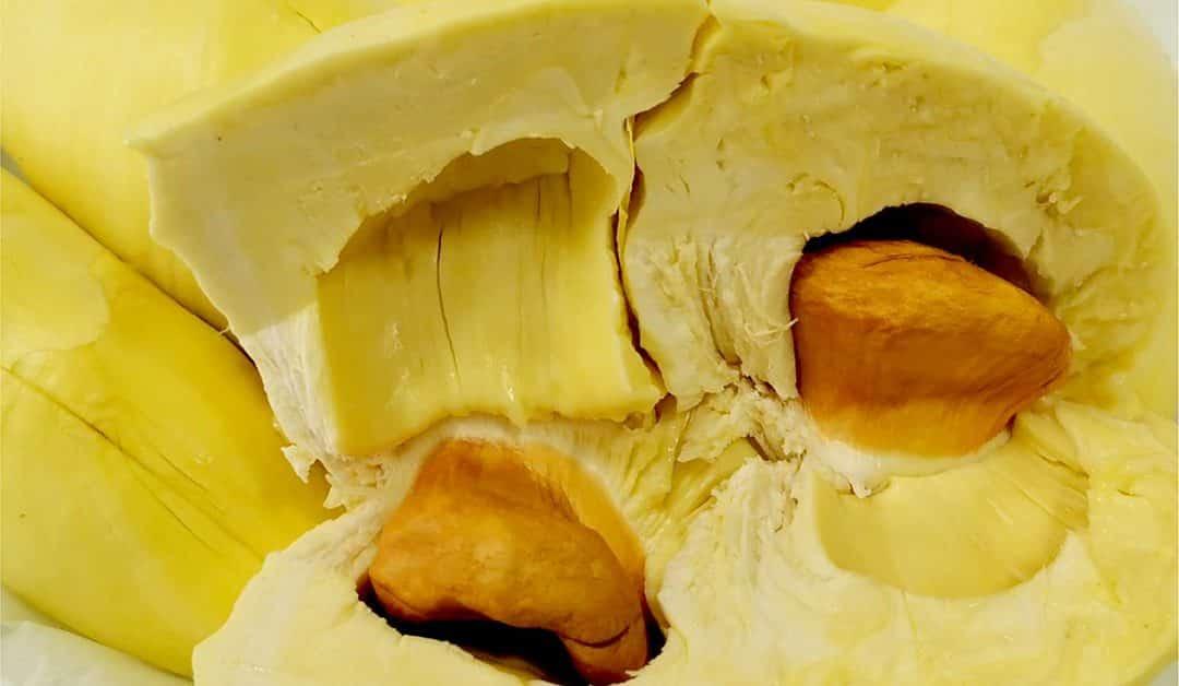2 0 1080x628 - แนะนำทุเรียนป่าละอู (Pala-u-durian) ทุเรียนหมอนทอง ที่ให้รสหวาน เนื้อหนาเนียนละเอียด