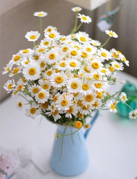 Daisy 05 e1592541293514 - ความหมายของดอกไม้แต่ละชนิด ที่นิยมนำมาจัดใส่แจกัน