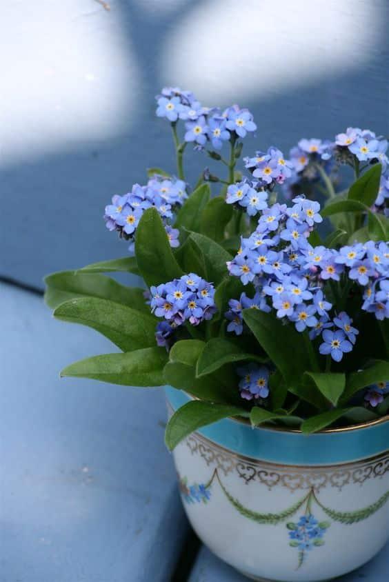 Forget Me Not 03 - ความหมายของดอกไม้แต่ละชนิด ที่นิยมนำมาจัดใส่แจกัน