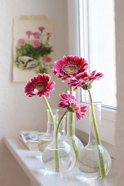 Gerbere 01 - ความหมายของดอกไม้แต่ละชนิด ที่นิยมนำมาจัดใส่แจกัน