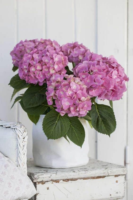 Hydrangea 05 - ความหมายของดอกไม้แต่ละชนิด ที่นิยมนำมาจัดใส่แจกัน