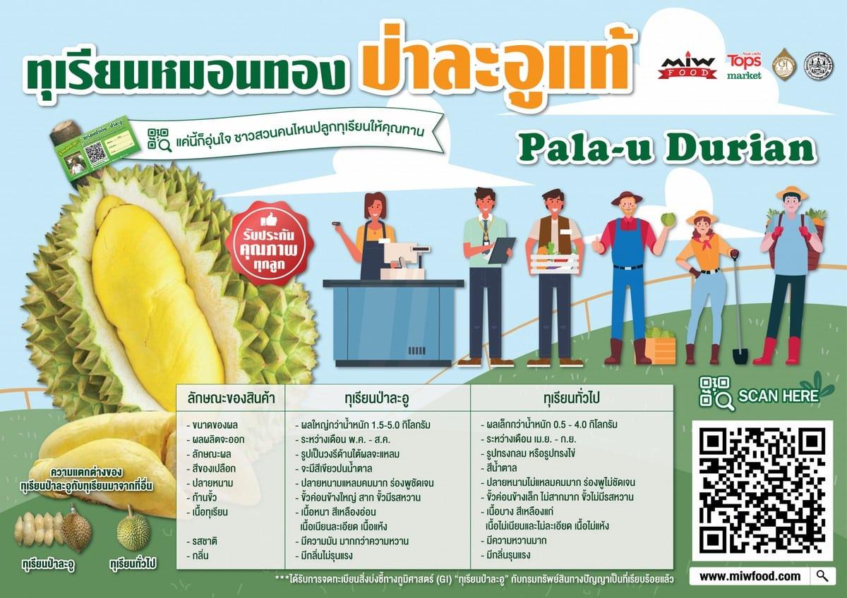 Poster Pala u Durian 01 2048x1448 1 - แนะนำทุเรียนป่าละอู (Pala-u-durian) ทุเรียนหมอนทอง ที่ให้รสหวาน เนื้อหนาเนียนละเอียด