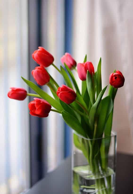 Tulip 03 - ความหมายของดอกไม้แต่ละชนิด ที่นิยมนำมาจัดใส่แจกัน