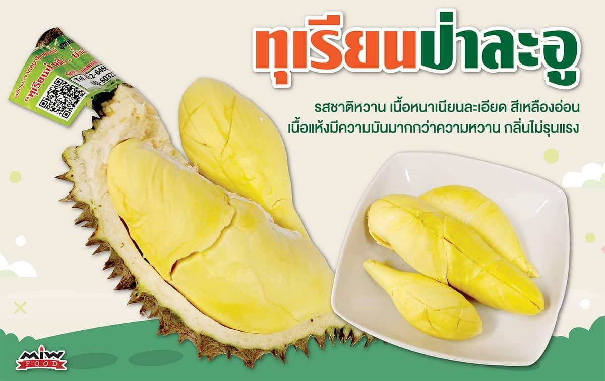 Untitled 2 - แนะนำทุเรียนป่าละอู (Pala-u-durian) ทุเรียนหมอนทอง ที่ให้รสหวาน เนื้อหนาเนียนละเอียด