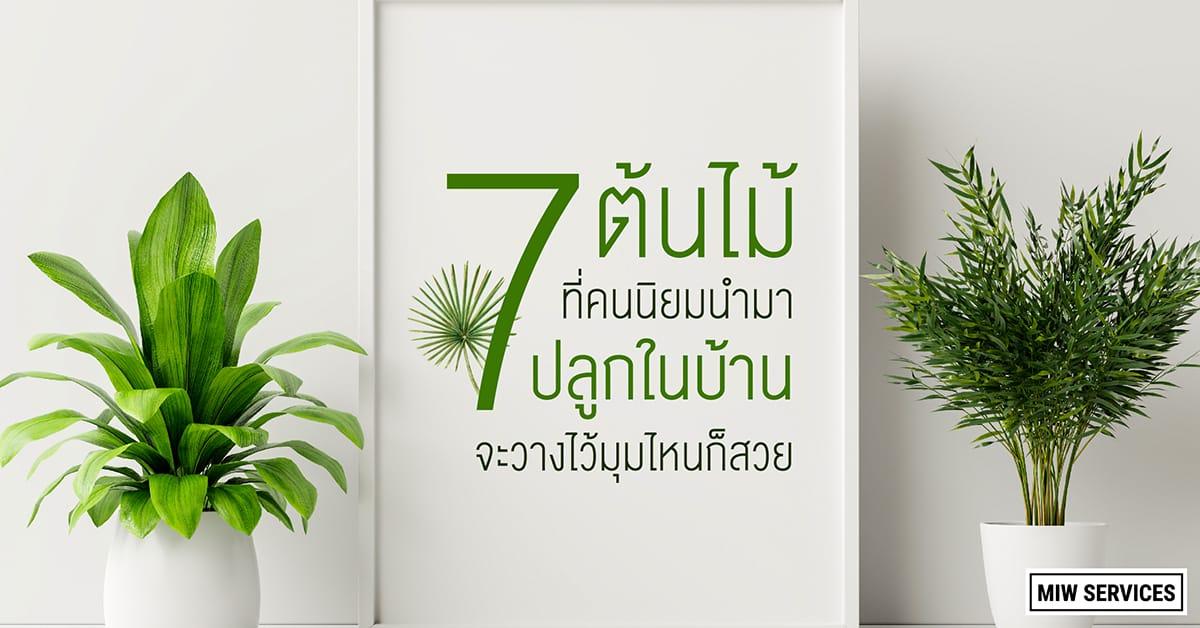 Website MIWServices 7 popular trees planted in the house 01 - 7 ต้นไม้ที่คนนิยมนำมาปลูกในบ้าน จะวางไว้มุมไหนก็สวย