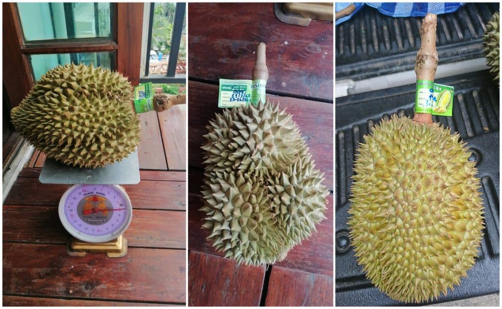 "pala u durian 1 1024x630 - นอภ.หัวหิน แนะ ""ทุเรียนป่าละอู"" ของแท้ต้องมี QR Code หากแอบอ้างจำคุก 3 ปี ปรับไม่เกิน 6,000 บาท"