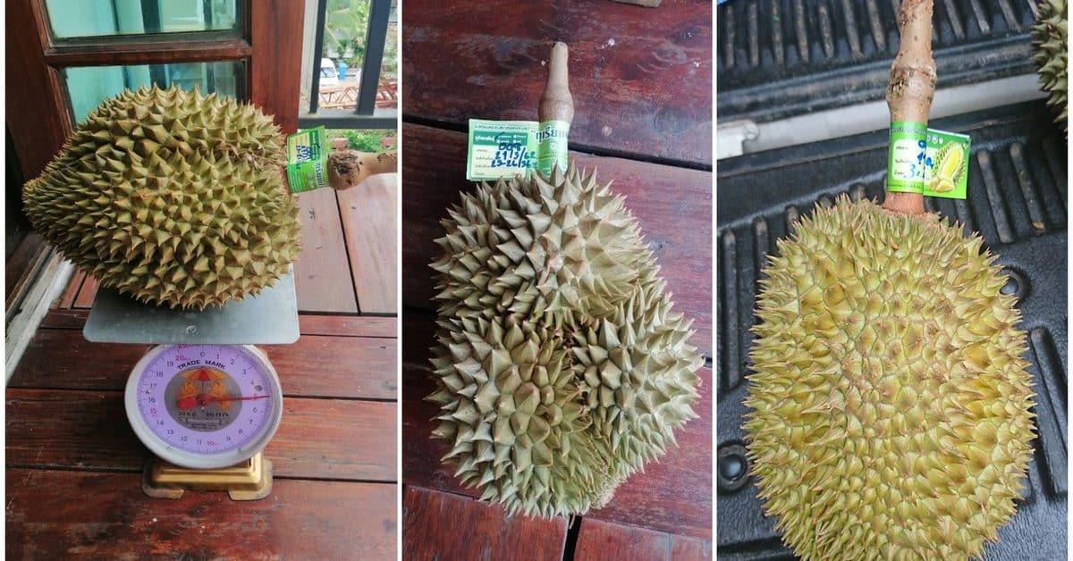 pala u durian 1 1200x628 - News