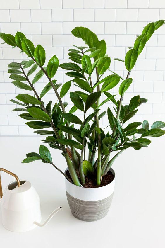 plant 05 - 7 ต้นไม้ที่คนนิยมนำมาปลูกในบ้าน จะวางไว้มุมไหนก็สวย