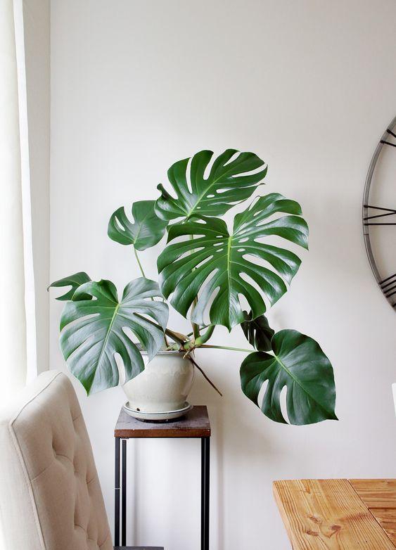 plant 09 - 7 ต้นไม้ที่คนนิยมนำมาปลูกในบ้าน จะวางไว้มุมไหนก็สวย