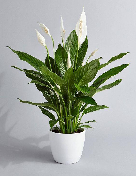 plant 10 - 7 ต้นไม้ที่คนนิยมนำมาปลูกในบ้าน จะวางไว้มุมไหนก็สวย