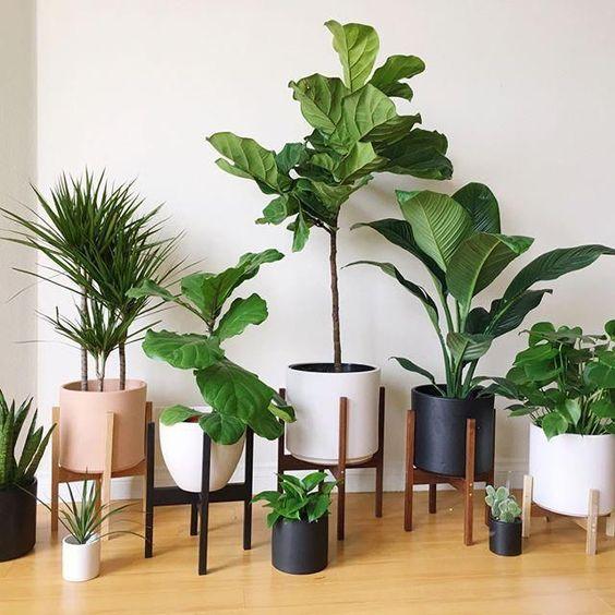 plant 13 - 7 ต้นไม้ที่คนนิยมนำมาปลูกในบ้าน จะวางไว้มุมไหนก็สวย