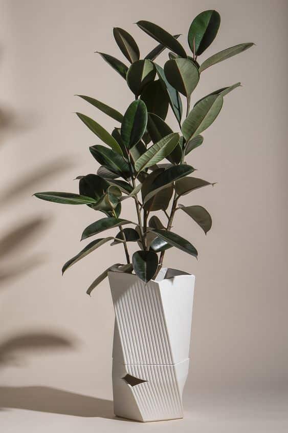 plant 16 - 7 ต้นไม้ที่คนนิยมนำมาปลูกในบ้าน จะวางไว้มุมไหนก็สวย
