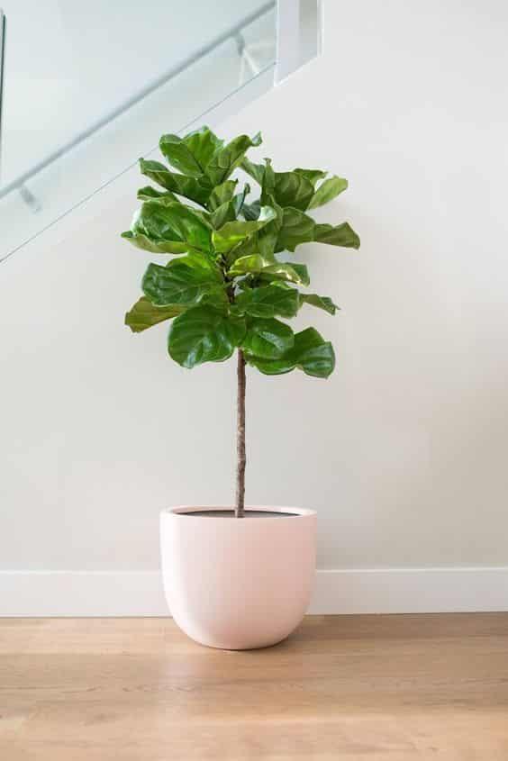 plant 17 - 7 ต้นไม้ที่คนนิยมนำมาปลูกในบ้าน จะวางไว้มุมไหนก็สวย