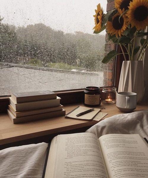bookmiw 06 - แนะนำวิธีเก็บรักษาหนังสือเล่มโปรด ให้คงทน และห่างไกลปลวก