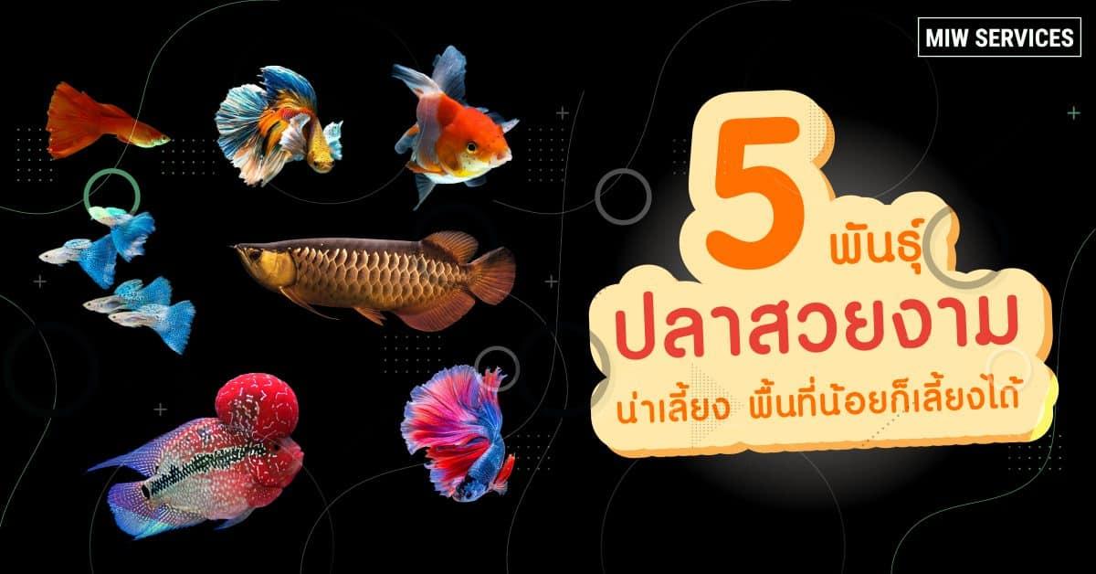 5 Ornamental Fish 1200x628 - News