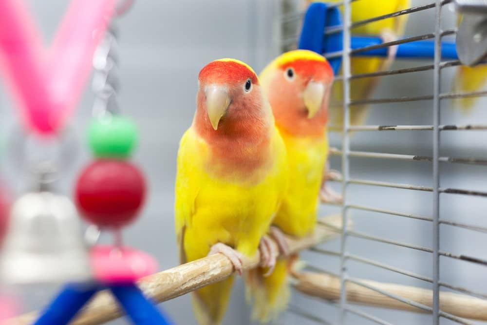 Bird 01 - แนะนำ 5 พันธุ์นกน่าเลี้ยง คลายทุกข์ช่วงโควิด-19