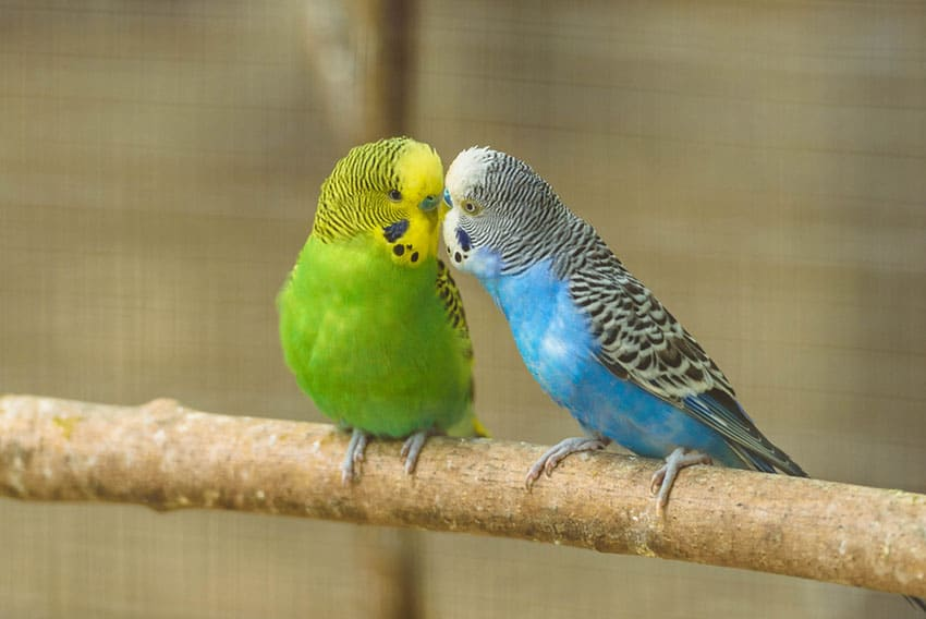 Bird 02 - แนะนำ 5 พันธุ์นกน่าเลี้ยง คลายทุกข์ช่วงโควิด-19