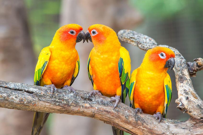 Bird 03 - แนะนำ 5 พันธุ์นกน่าเลี้ยง คลายทุกข์ช่วงโควิด-19