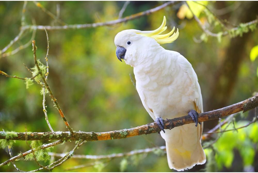 Bird 05 - แนะนำ 5 พันธุ์นกน่าเลี้ยง คลายทุกข์ช่วงโควิด-19