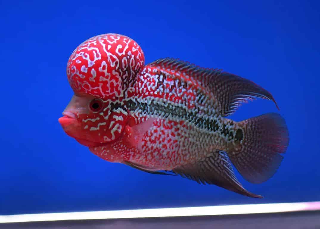 fish 01 - 5 พันธุ์ปลาสวยงาม น่าเลี้ยง พื้นที่น้อยก็เลี้ยงได้