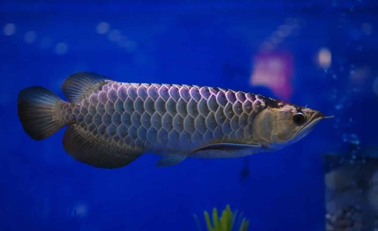 fish 05 - 5 พันธุ์ปลาสวยงาม น่าเลี้ยง พื้นที่น้อยก็เลี้ยงได้